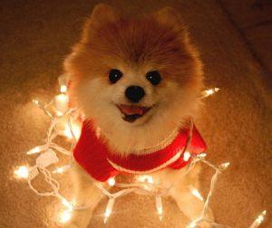 pom lights